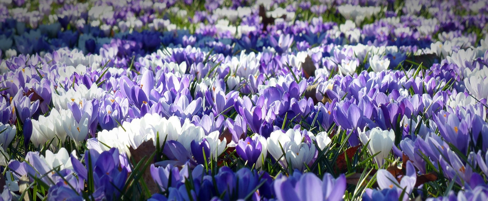 Adachi Florist and Nursery